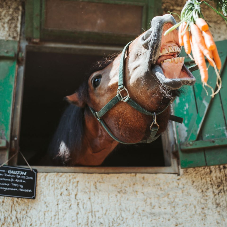 Pferd gefüttert