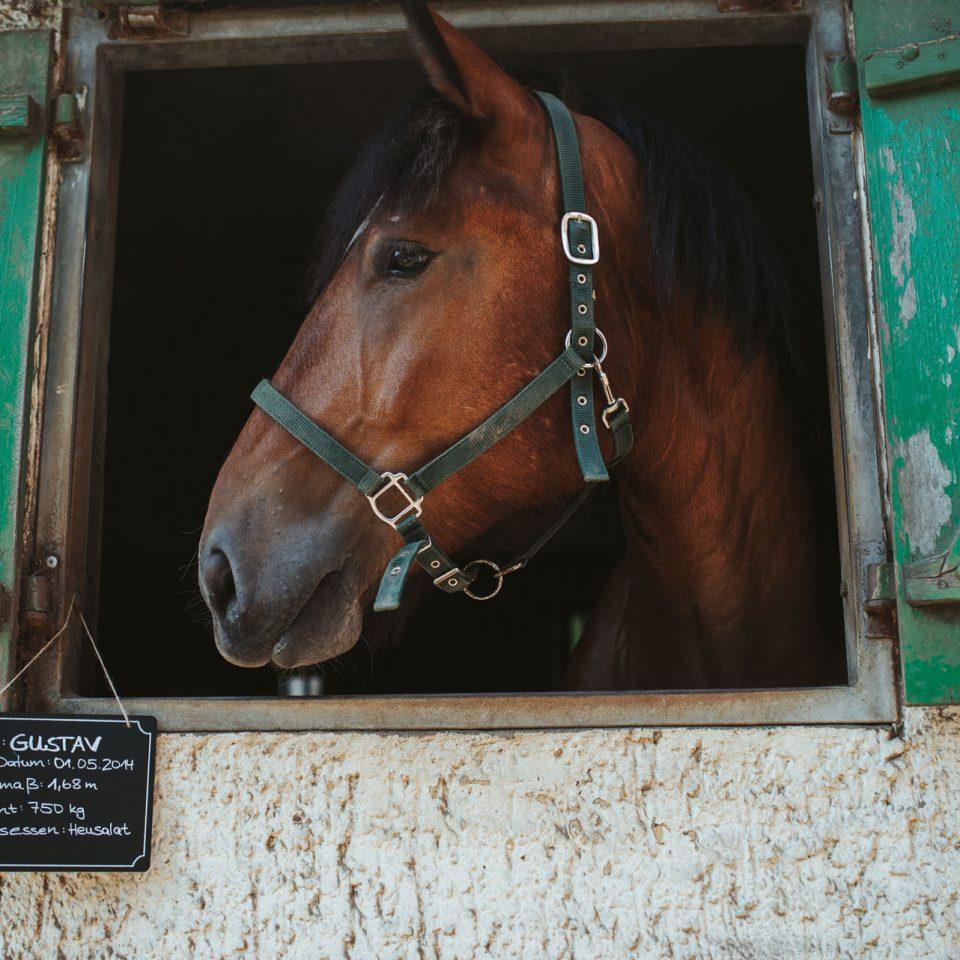 Kopf des Pferdes